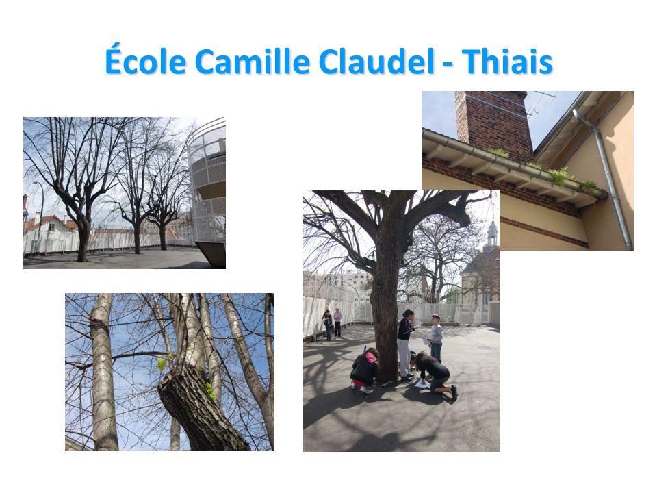 École Camille Claudel - Thiais