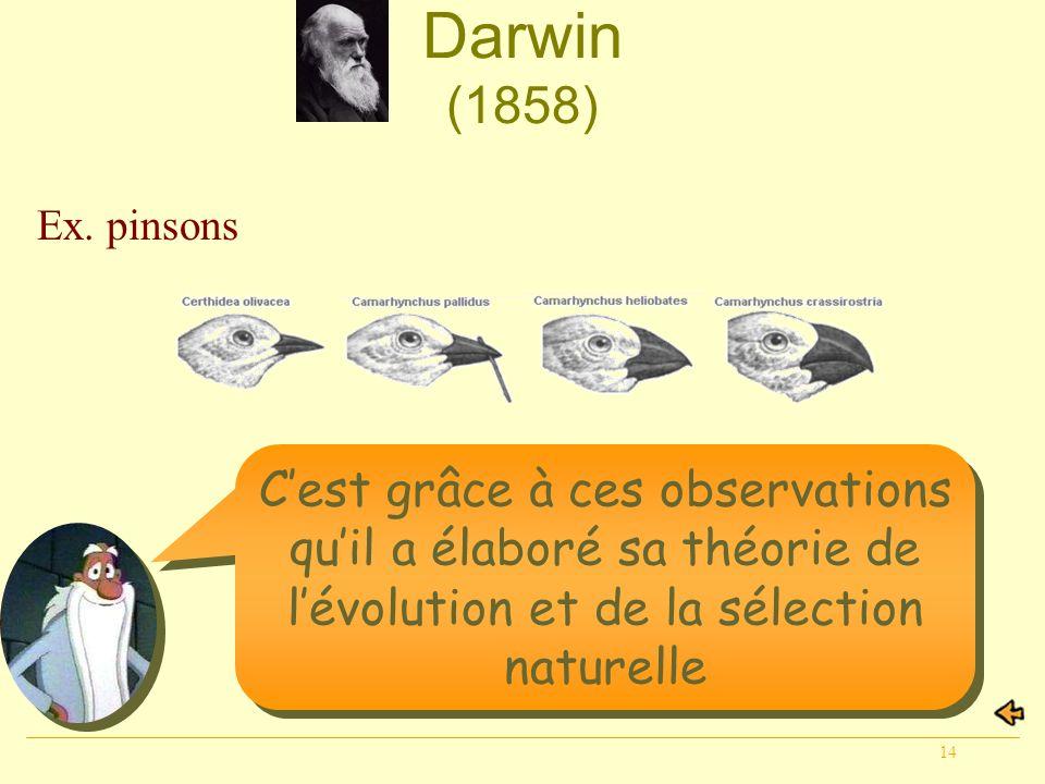 14 Darwin (1858) Cest grâce à ces observations quil a élaboré sa théorie de lévolution et de la sélection naturelle Ex. pinsons