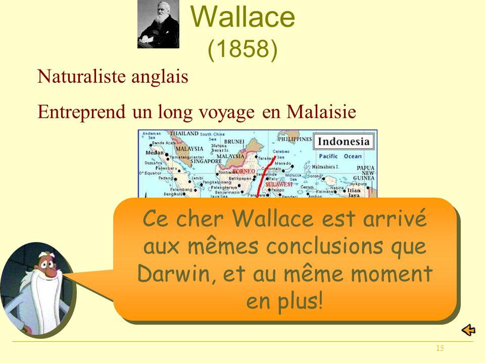 15 Wallace (1858) Naturaliste anglais Entreprend un long voyage en Malaisie Ce cher Wallace est arrivé aux mêmes conclusions que Darwin, et au même mo