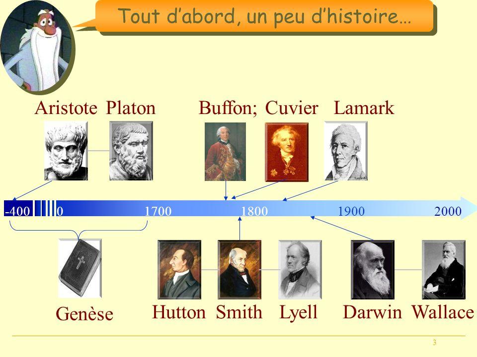 3 Tout dabord, un peu dhistoire… Genèse -40001800190020001700 AristotePlatonBuffon; Cuvier HuttonLyellSmith Lamark DarwinWallace