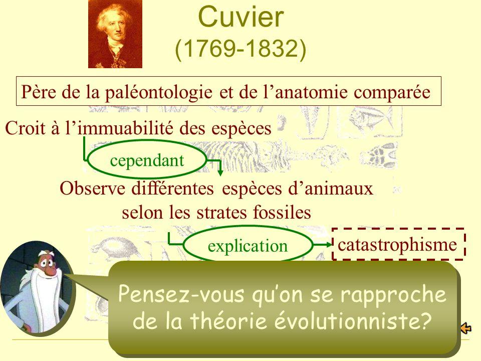 Geneviève Beauchamp6 Cuvier (1769-1832) Père de la paléontologie et de lanatomie comparée Non, les espèces sont fixes et immuables Croit à limmuabilit