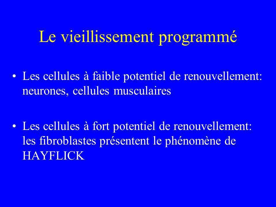 Le vieillissement programmé Les cellules à faible potentiel de renouvellement: neurones, cellules musculaires Les cellules à fort potentiel de renouve