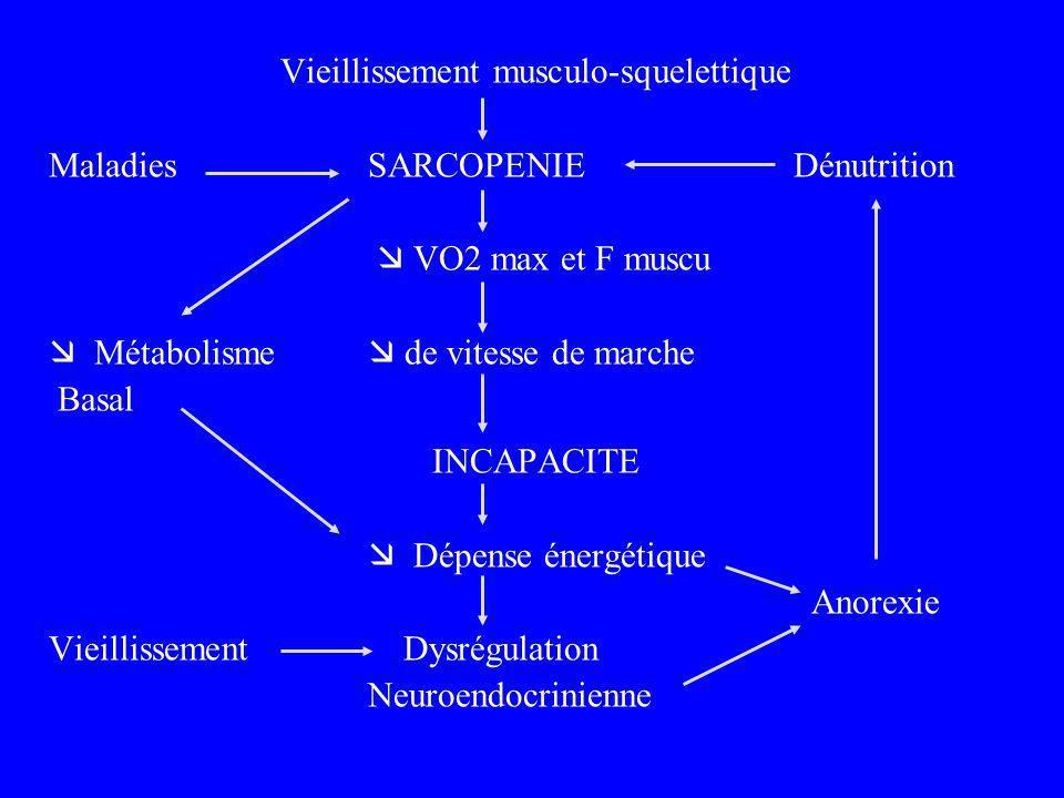 Vieillissement musculo-squelettique MaladiesSARCOPENIEDénutrition VO2 max et F muscu Métabolisme de vitesse de marche Basal INCAPACITE Dépense énergét