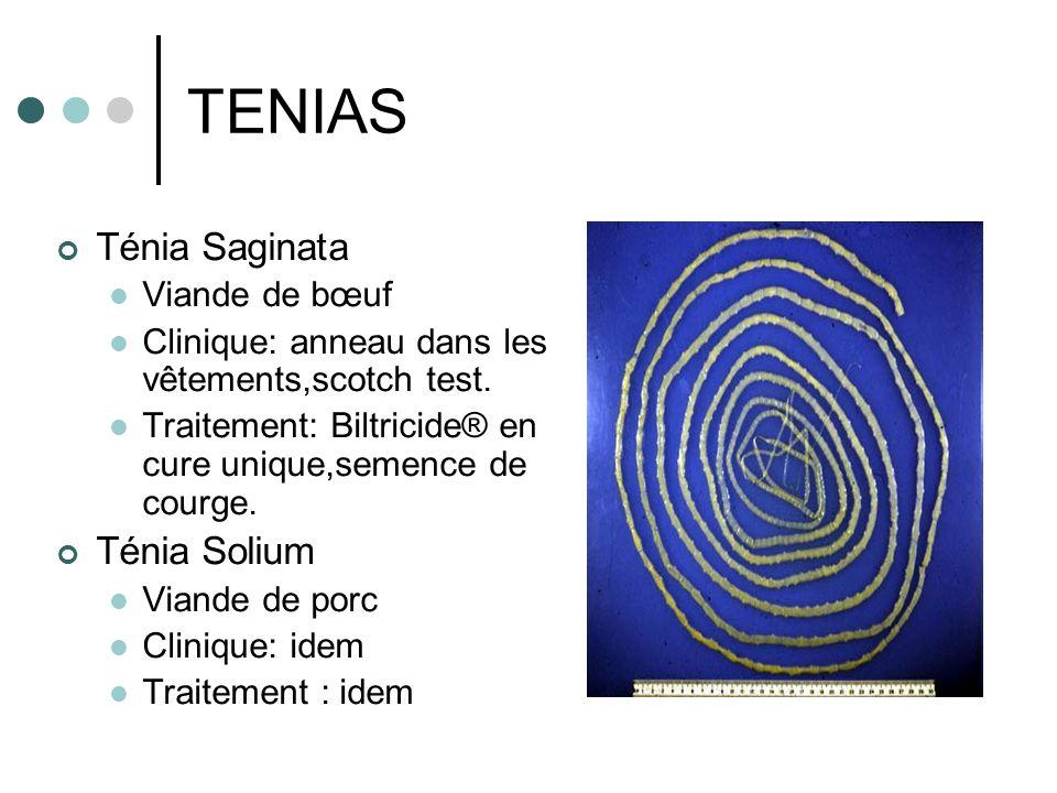 TENIAS Ténia Saginata Viande de bœuf Clinique: anneau dans les vêtements,scotch test. Traitement: Biltricide® en cure unique,semence de courge. Ténia