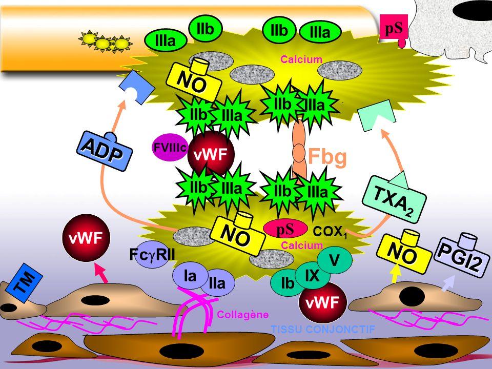 IIIa Fbg vWF FVIIIc pS IIb IIIa IIb IIIa IIb IIIa TISSU CONJONCTIF vWF Ib IX V Collagène IIa Ia IIb COX 1 ADP TXA 2 pS vWF NO PGI2 TM IIIa IIb NO Calc