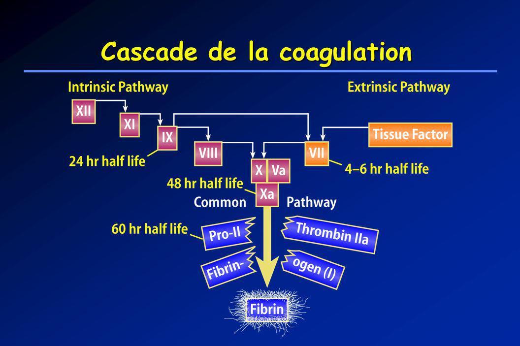 Cascade de la coagulation