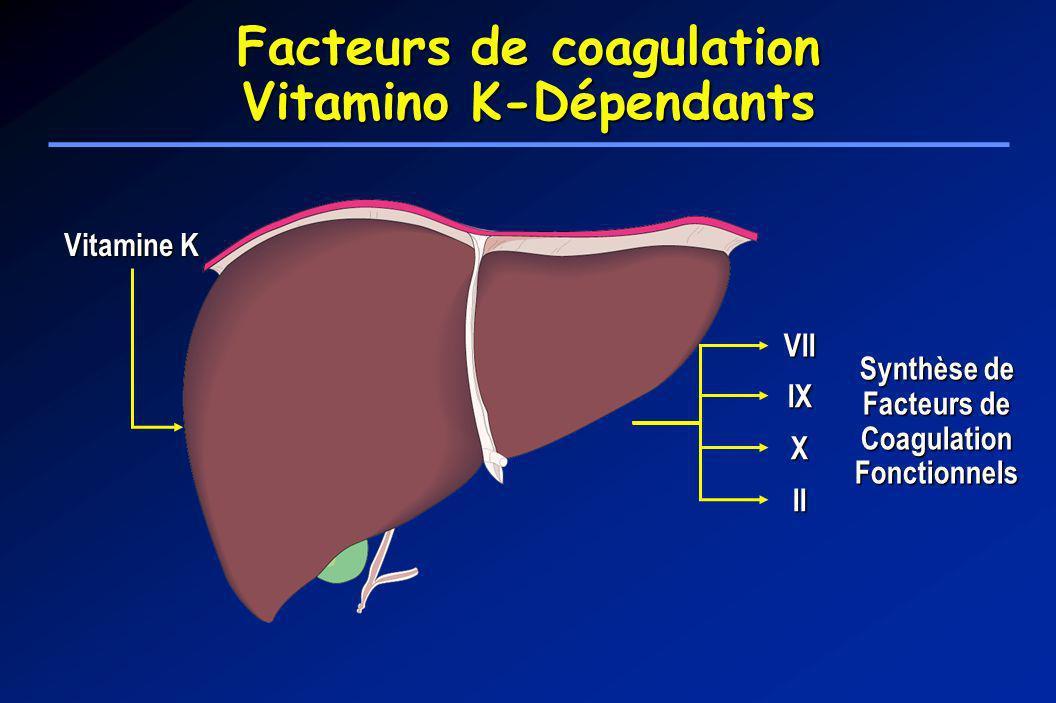Vitamine K Synthèse de Facteurs de Coagulation Fonctionnels VII IX X II Facteurs de coagulation Vitamino K-Dépendants