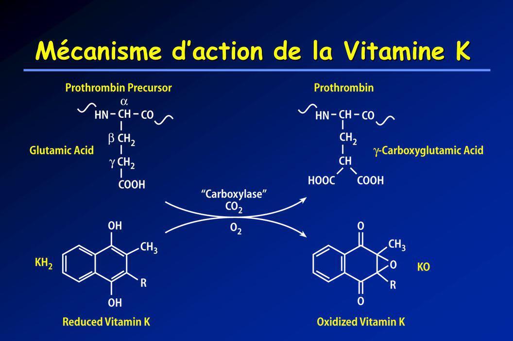 Mécanisme daction de la Vitamine K