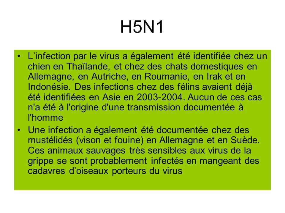 H5N1 Linfection par le virus a également été identifiée chez un chien en Thaïlande, et chez des chats domestiques en Allemagne, en Autriche, en Rouman