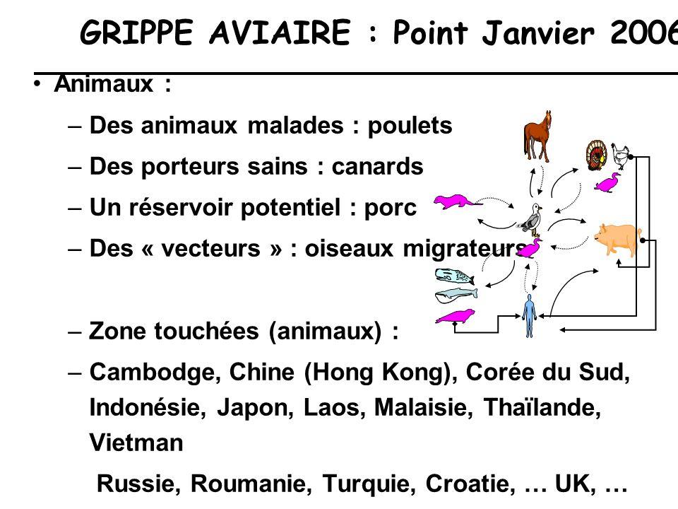 GRIPPE AVIAIRE : Point Janvier 2006 Animaux : –Des animaux malades : poulets –Des porteurs sains : canards –Un réservoir potentiel : porc –Des « vecte