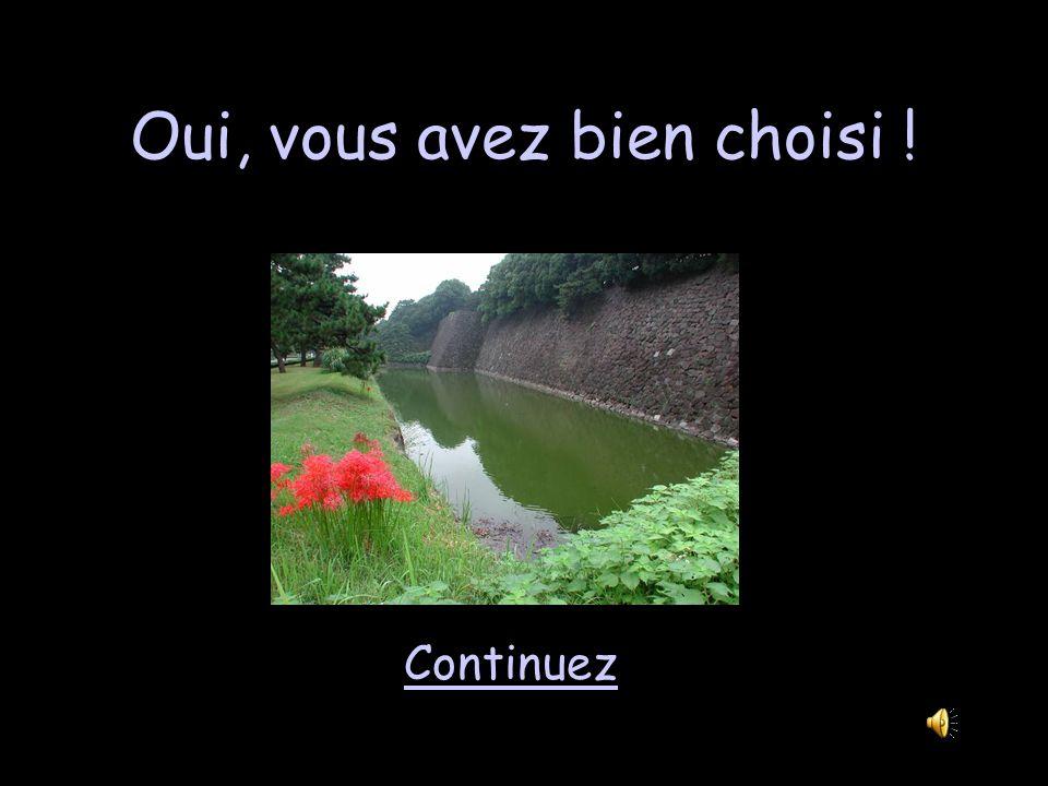 Châteaux 2 - 200 Le canal rempli deau qui se trouvait autour du château sappelait… une motte une douve un jardin un lac