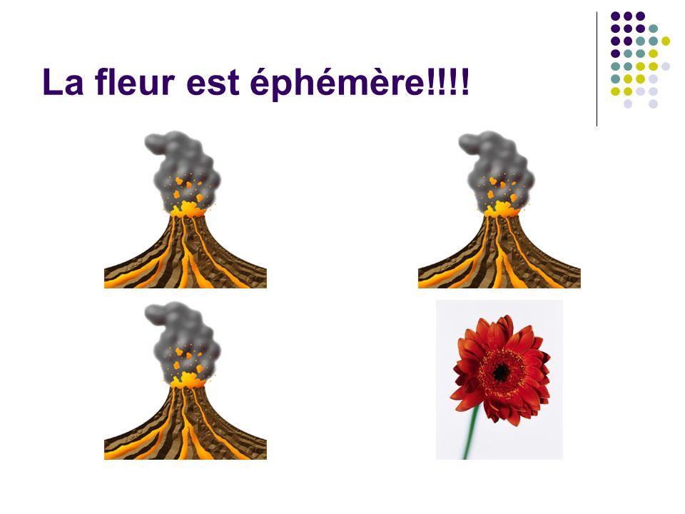 La fleur est éphémère!!!!