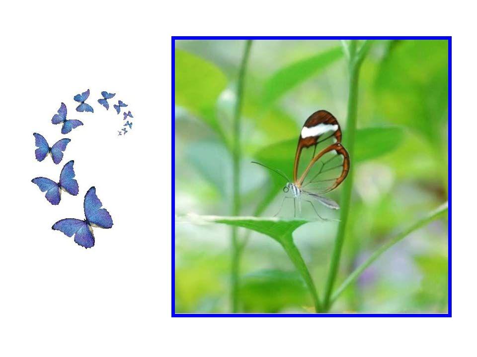 Et si jamais vous même, vous pouvez un jour regarder le monde à travers le biais de leur ailes, vous trouverez certainement un nouveau sens pour votre vie.