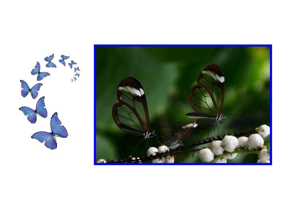 Il en va de même pour la transparence des papillons.