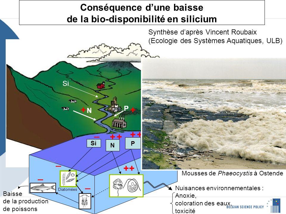 Conséquence dune baisse de la bio-disponibilité en silicium N P Si N P + + ++ _ _ _ _ ++ Algues non siliceuses Diatomées Nuisances environnementales : Anoxie, coloration des eaux, toxicité Baisse de la production de poissons + + Mousses de Phaeocystis à Ostende Synthèse daprès Vincent Roubaix (Ecologie des Systèmes Aquatiques, ULB)
