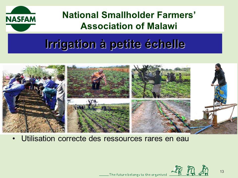 National Smallholder Farmers Association of Malawi Réponses des petits agriculteurs Agriculture de conservation Sensibilisation -90 % dadoption Réduction de la vulnérabilité Amélioration de la structure et de la texture du sol 12