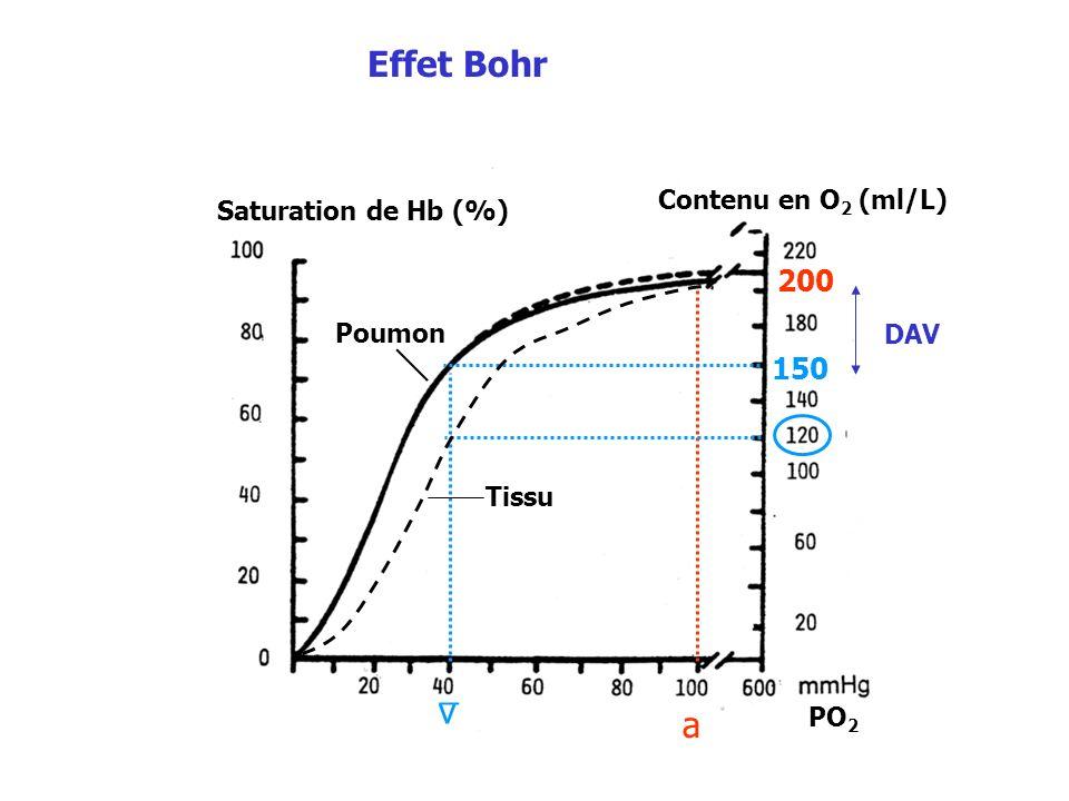 Saturation de Hb (%) Contenu en O 2 (ml/L) Tissu Poumon 200 150 a v _ PO 2 Effet Bohr DAV