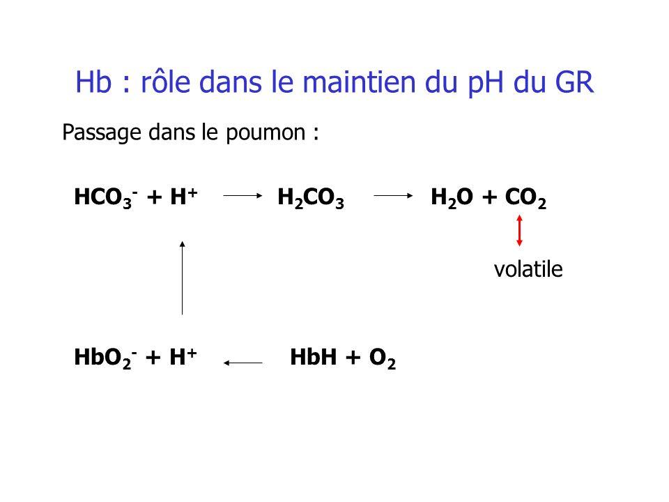 HCO 3 - + H + H 2 CO 3 H 2 O + CO 2 HbO 2 - + H + HbH + O 2 Hb : rôle dans le maintien du pH du GR Passage dans le poumon : volatile