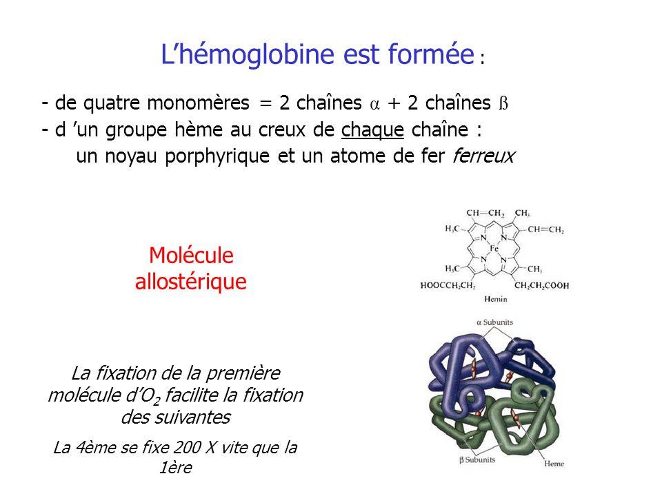 - de quatre monomères = 2 chaînes α + 2 chaînes ß - d un groupe hème au creux de chaque chaîne : un noyau porphyrique et un atome de fer ferreux Lhémo