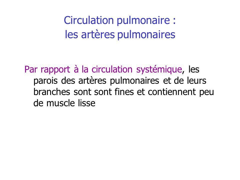Circulation pulmonaire : les artères pulmonaires Par rapport à la circulation systémique, les parois des artères pulmonaires et de leurs branches sont