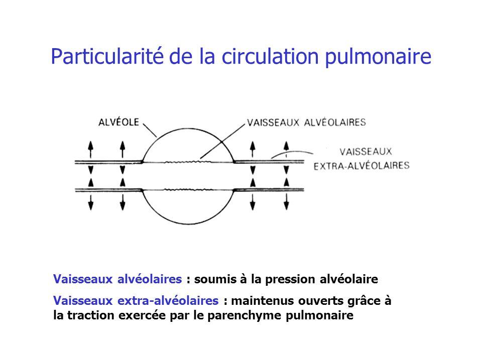 Particularité de la circulation pulmonaire Vaisseaux alvéolaires : soumis à la pression alvéolaire Vaisseaux extra-alvéolaires : maintenus ouverts grâ