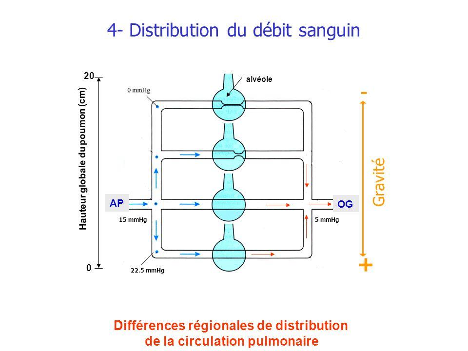 4- Distribution du débit sanguin Hauteur globale du poumon (cm) 0 20 alvéole OG Différences régionales de distribution de la circulation pulmonaire 22