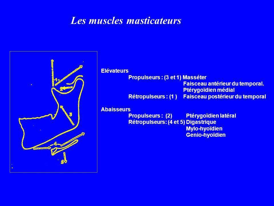 Elévateurs Propulseurs : (3 et 1) Masséter Faisceau antérieur du temporal. Ptérygoïdien médial Rétropulseurs : (1 ) Faisceau postérieur du temporal Ab