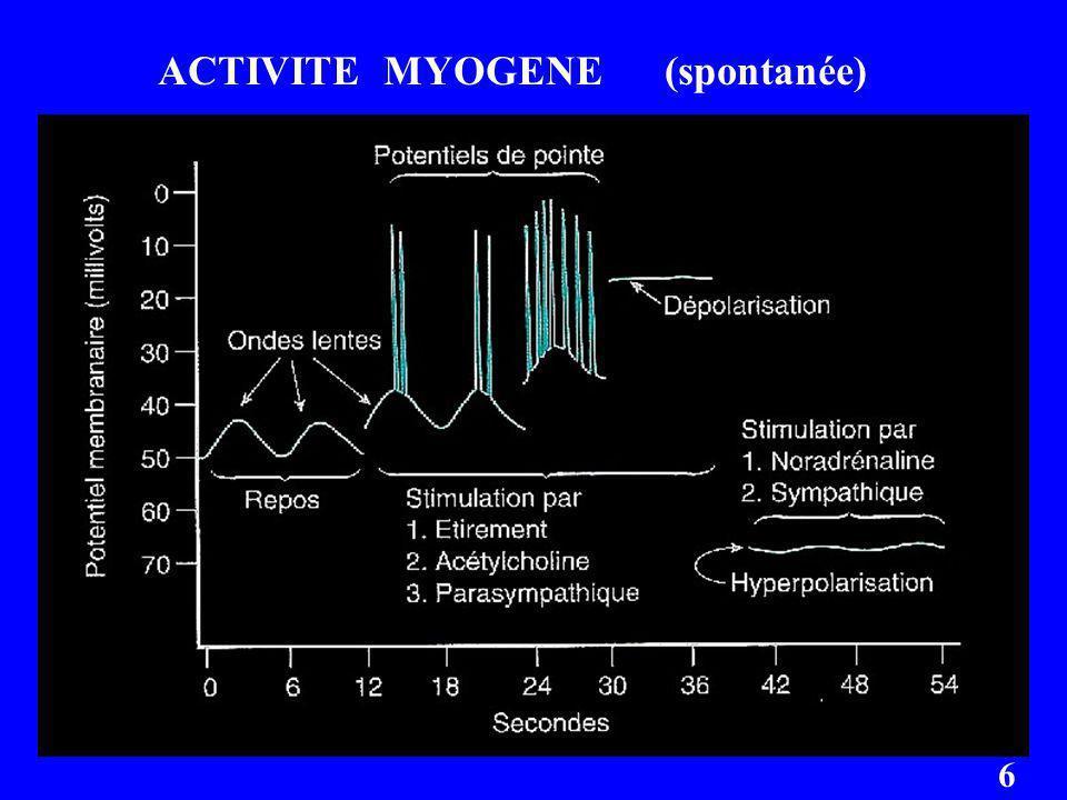 ACTIVITE MYOGENE (spontanée) 6
