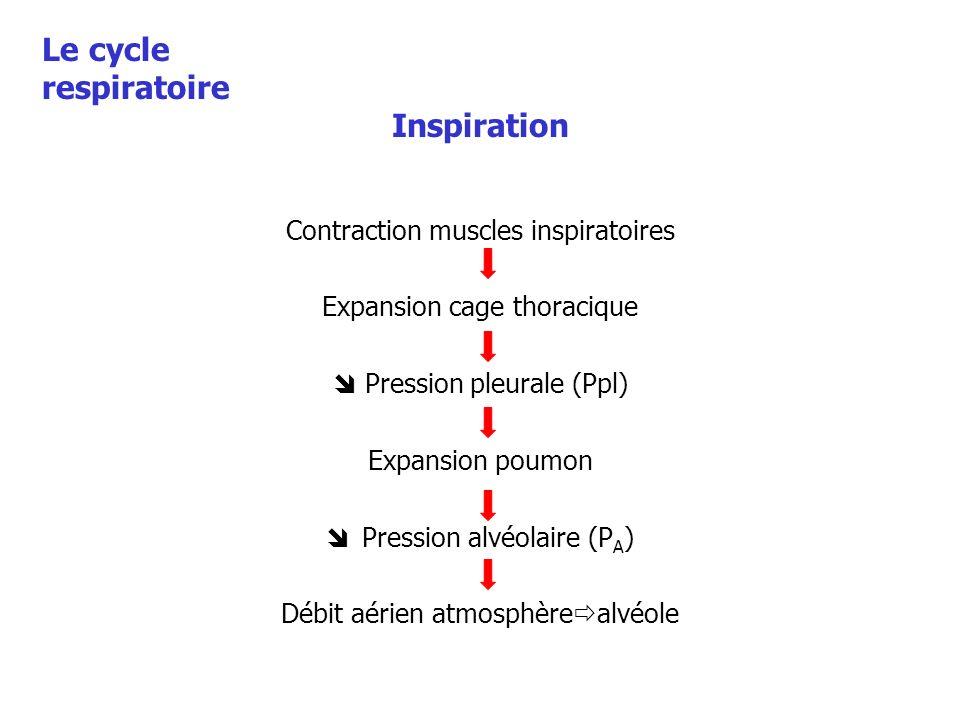 Inspiration Contraction muscles inspiratoires Expansion cage thoracique Pression pleurale (Ppl) Expansion poumon Pression alvéolaire (P A ) Débit aéri