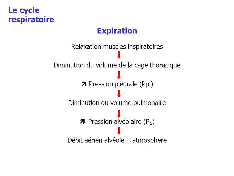 Expiration Relaxation muscles inspiratoires Diminution du volume de la cage thoracique Pression pleurale (Ppl) Diminution du volume pulmonaire Pressio