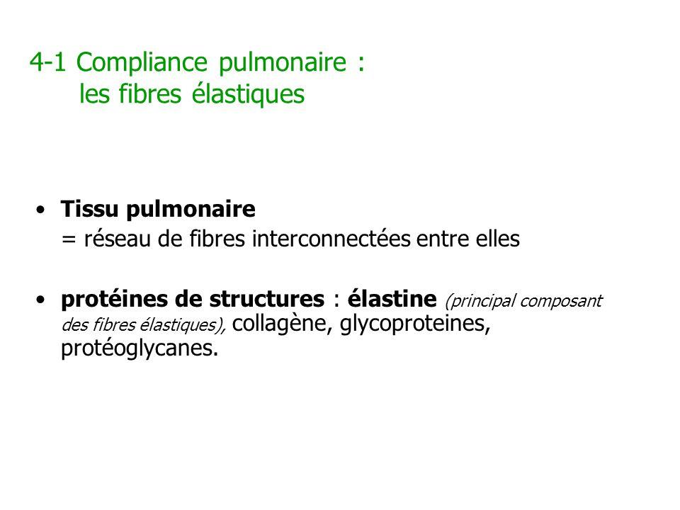 4-1 Compliance pulmonaire : les fibres élastiques Tissu pulmonaire = réseau de fibres interconnectées entre elles protéines de structures : élastine (