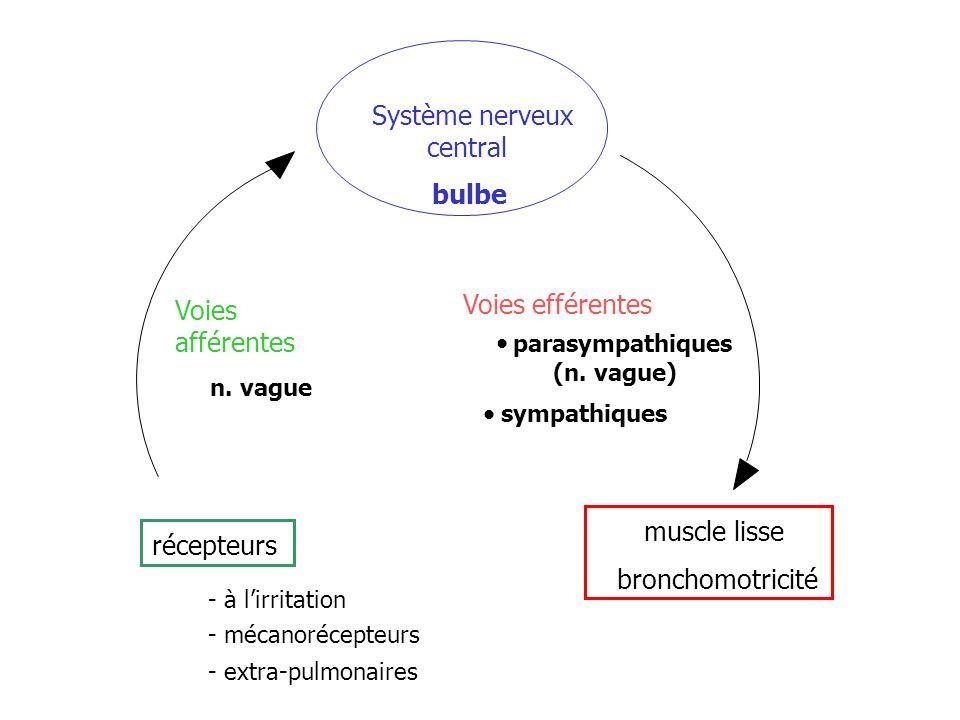 récepteurs Voies afférentes n. vague Système nerveux central bulbe Voies efférentes parasympathiques (n. vague) sympathiques muscle lisse bronchomotri