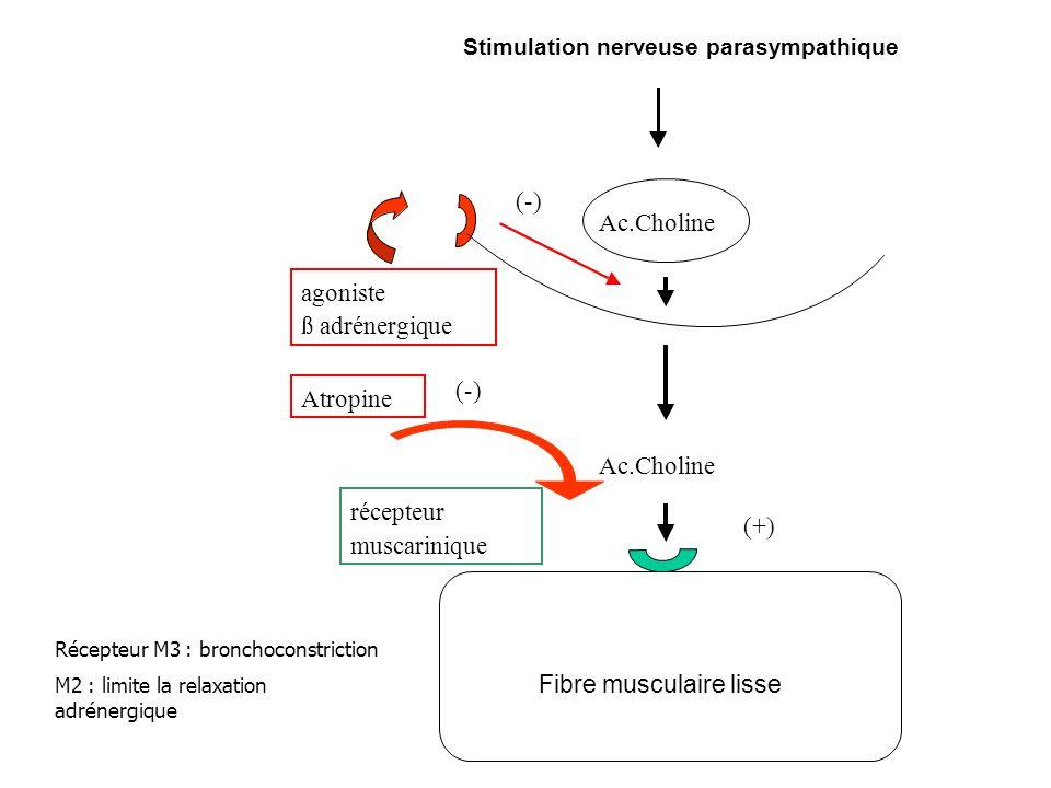Ac.Choline récepteur muscarinique agoniste ß adrénergique (-) Atropine (-) (+) Ac.Choline Stimulation nerveuse parasympathique Fibre musculaire lisse