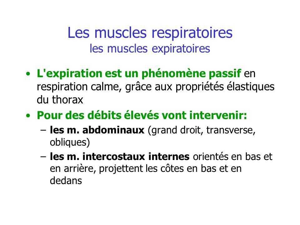 Les muscles respiratoires les muscles expiratoires L'expiration est un phénomène passif en respiration calme, grâce aux propriétés élastiques du thora