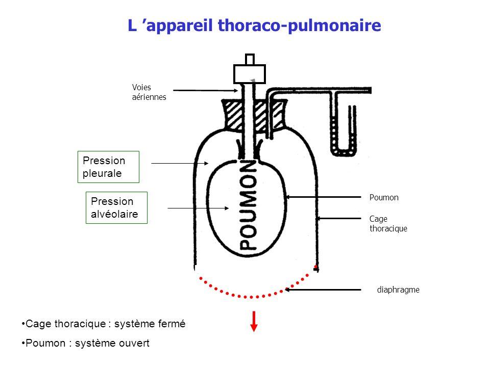 Cage thoracique : système fermé Loi des gaz : PV = nRT Loi de Boyle-Mariotte : PV = constante à température constante T : température, P : pression, V : volume P V V P