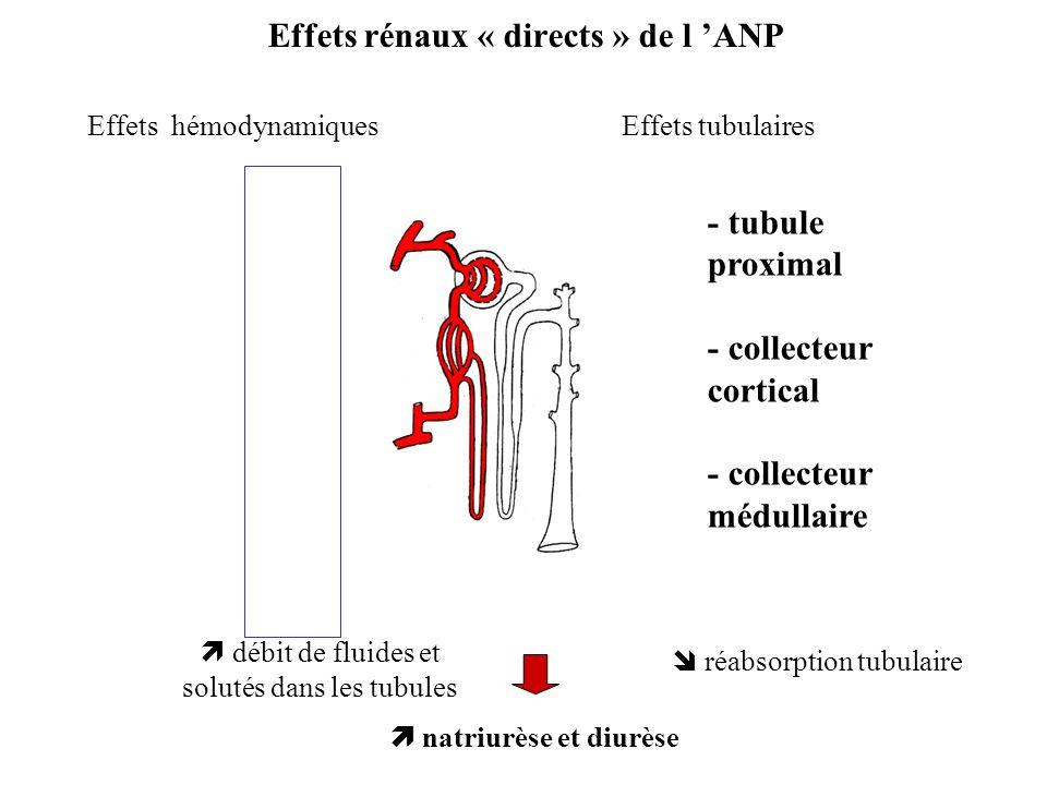 Effets rénaux « directs » de l ANP Effets hémodynamiquesEffets tubulaires débit de fluides et solutés dans les tubules réabsorption tubulaire natriurè