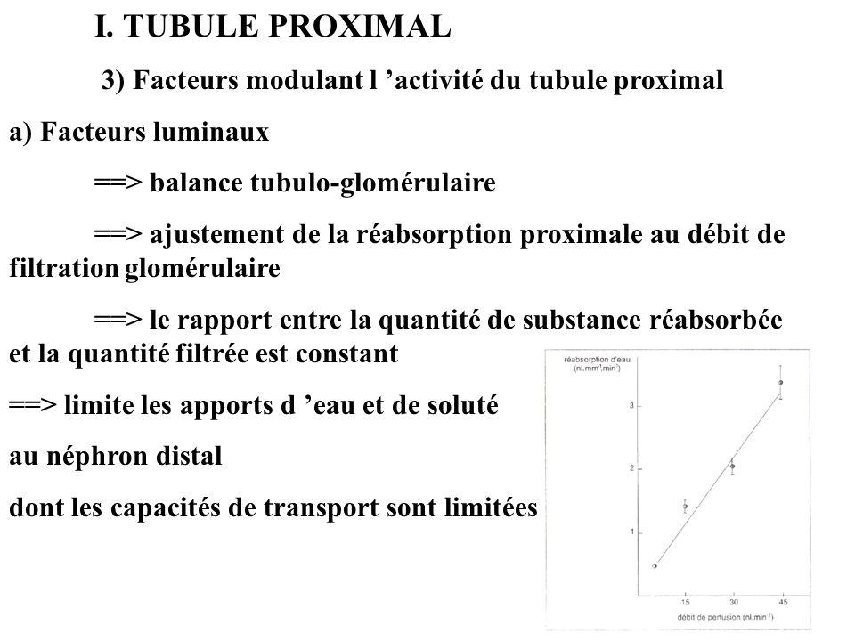 I. TUBULE PROXIMAL 3) Facteurs modulant l activité du tubule proximal a) Facteurs luminaux ==> balance tubulo-glomérulaire ==> ajustement de la réabso