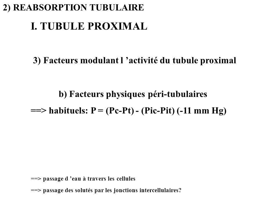 2) REABSORPTION TUBULAIRE I. TUBULE PROXIMAL 3) Facteurs modulant l activité du tubule proximal b) Facteurs physiques péri-tubulaires ==> habituels: P