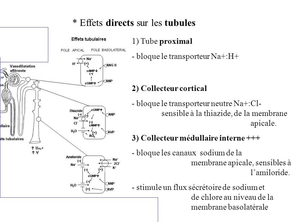 Synthèse des effets rénaux directs de l ANP