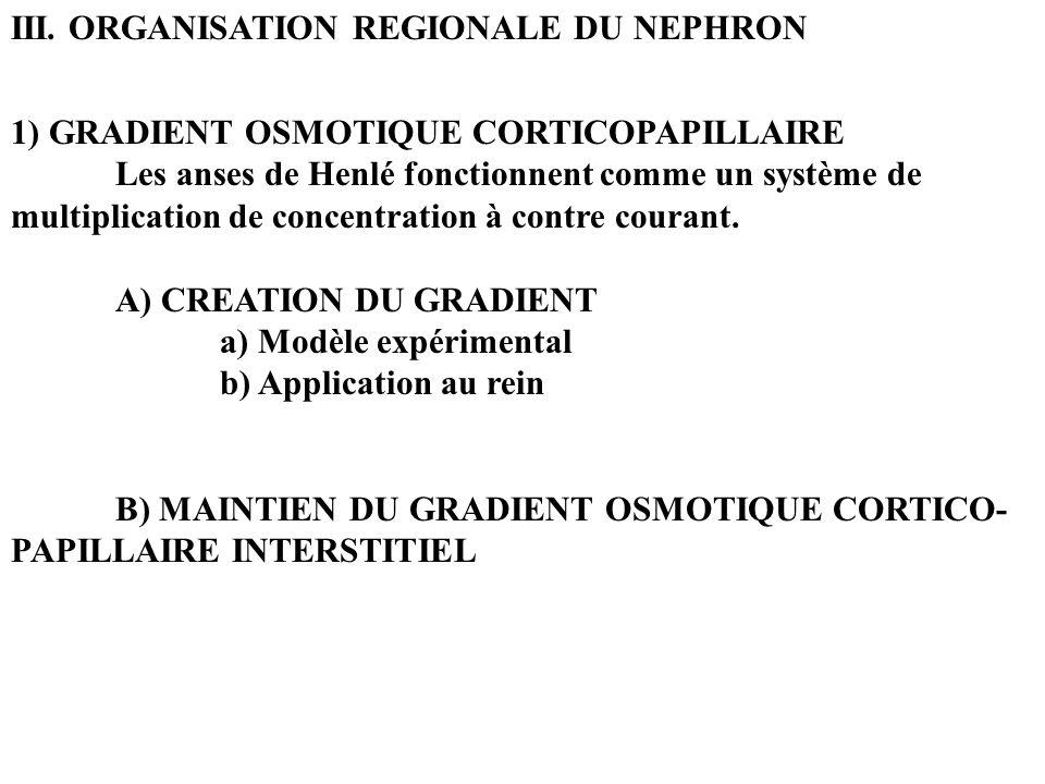 III. ORGANISATION REGIONALE DU NEPHRON 1) GRADIENT OSMOTIQUE CORTICOPAPILLAIRE Les anses de Henlé fonctionnent comme un système de multiplication de c