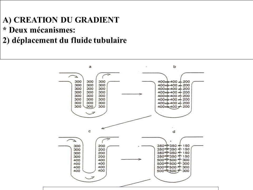 A) CREATION DU GRADIENT * Deux mécanismes: 2) déplacement du fluide tubulaire