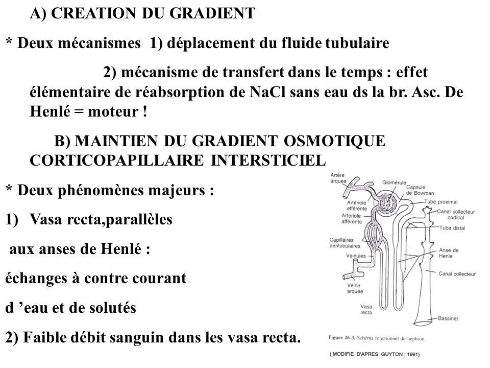 A) CREATION DU GRADIENT * Deux mécanismes 1) déplacement du fluide tubulaire 2) mécanisme de transfert dans le temps : effet élémentaire de réabsorpti