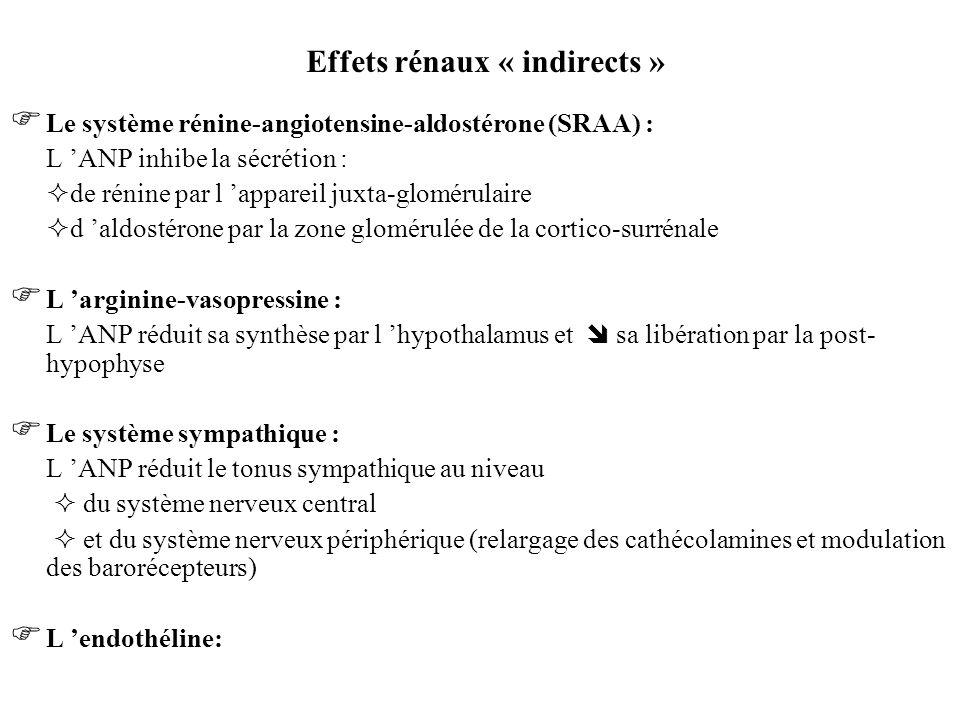 Effets rénaux « indirects » Le système rénine-angiotensine-aldostérone (SRAA) : L ANP inhibe la sécrétion : de rénine par l appareil juxta-glomérulair