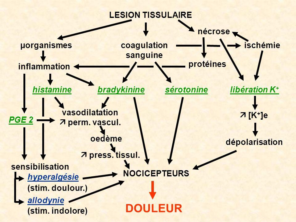 LESION TISSULAIRE vasodilatation perm. vascul. coagulation sanguine ischémie nécrose µorganismes oedème press. tissul. NOCICEPTEURS DOULEUR dépolarisa