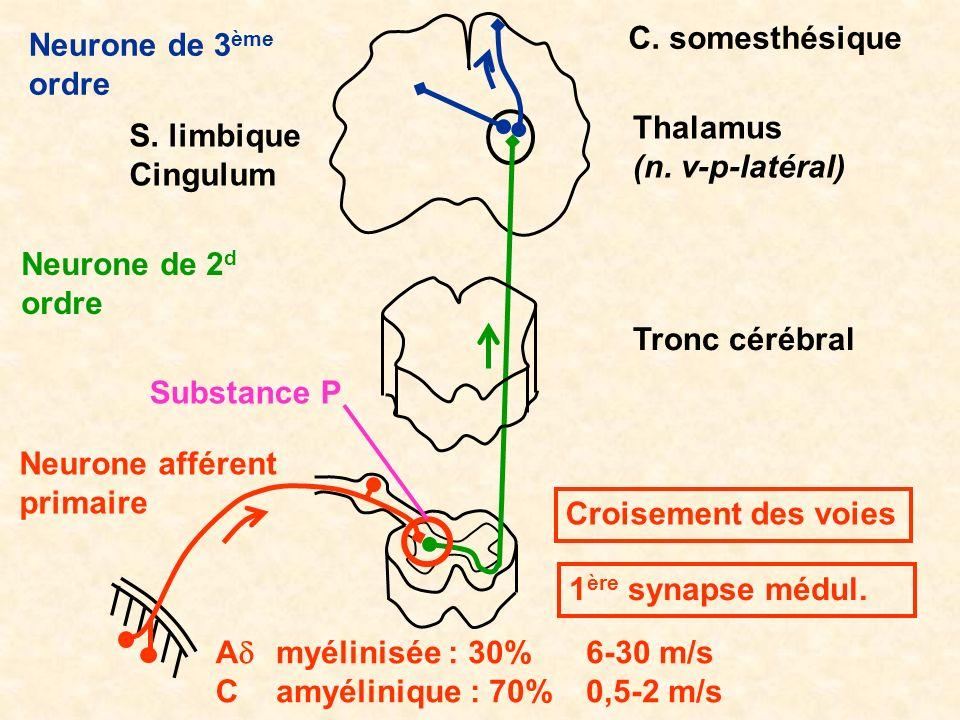 Tronc cérébral Thalamus (n. v-p-latéral) C. somesthésique Neurone afférent primaire A C Neurone de 2 d ordre Neurone de 3 ème ordre myélinisée : 30% a
