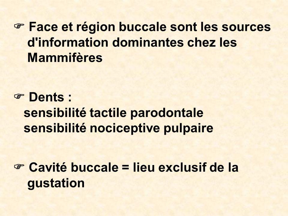 Face et région buccale sont les sources d'information dominantes chez les Mammifères Dents : sensibilité tactile parodontale sensibilité nociceptive p