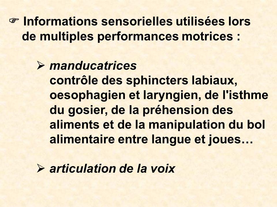 Informations sensorielles utilisées lors de multiples performances motrices : manducatrices contrôle des sphincters labiaux, oesophagien et laryngien,