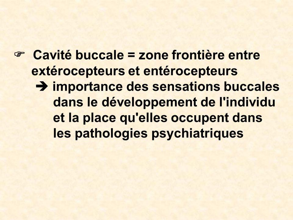 Cavité buccale = zone frontière entre extérocepteurs et entérocepteurs importance des sensations buccales dans le développement de l'individu et la pl