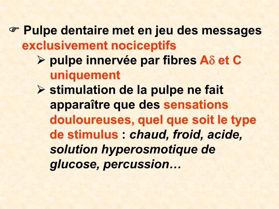 Pulpe dentaire met en jeu des messages exclusivement nociceptifs pulpe innervée par fibres A et C uniquement stimulation de la pulpe ne fait apparaîtr