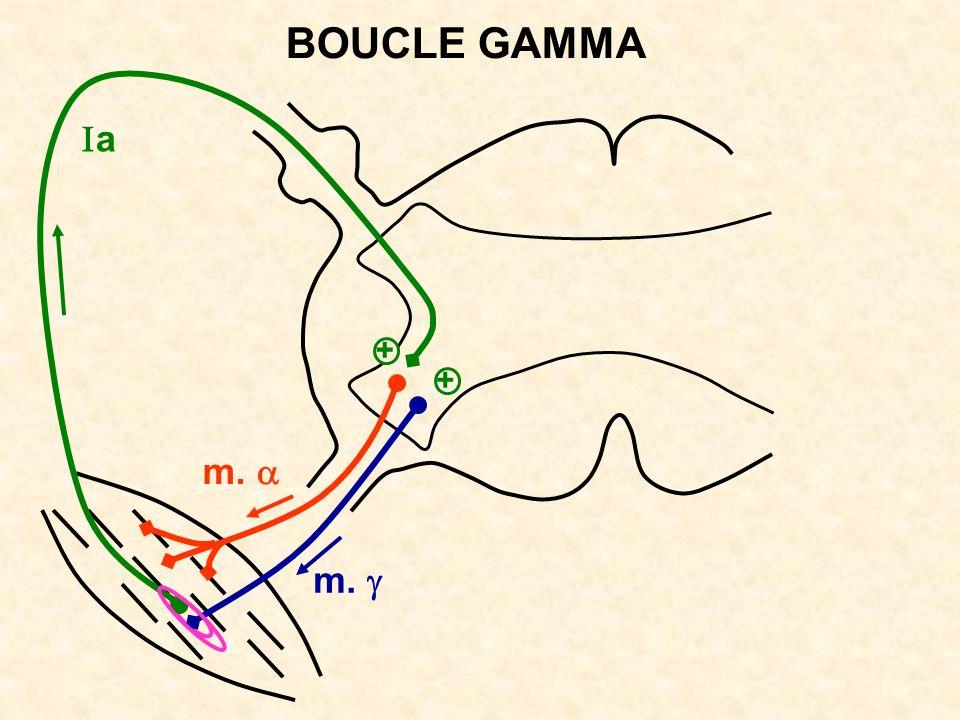 m. + a BOUCLE GAMMA +
